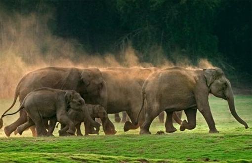 elefanti in libertà